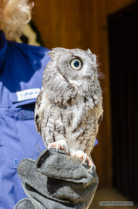 Small owl demonstration with Wings to Soar at Rock City Gardens