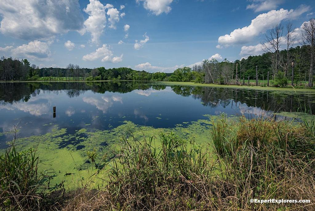 Ross Pond at Pee Dee National Wildlife Refuge, North Carolina