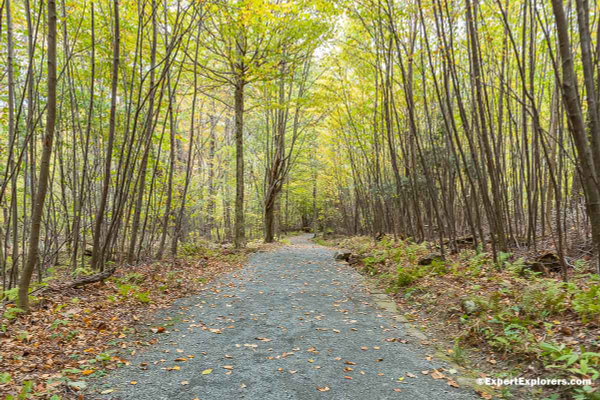 Gravel path surrounded by young wood on the Limberlost trail in the Shenandoah National Park, Virginia