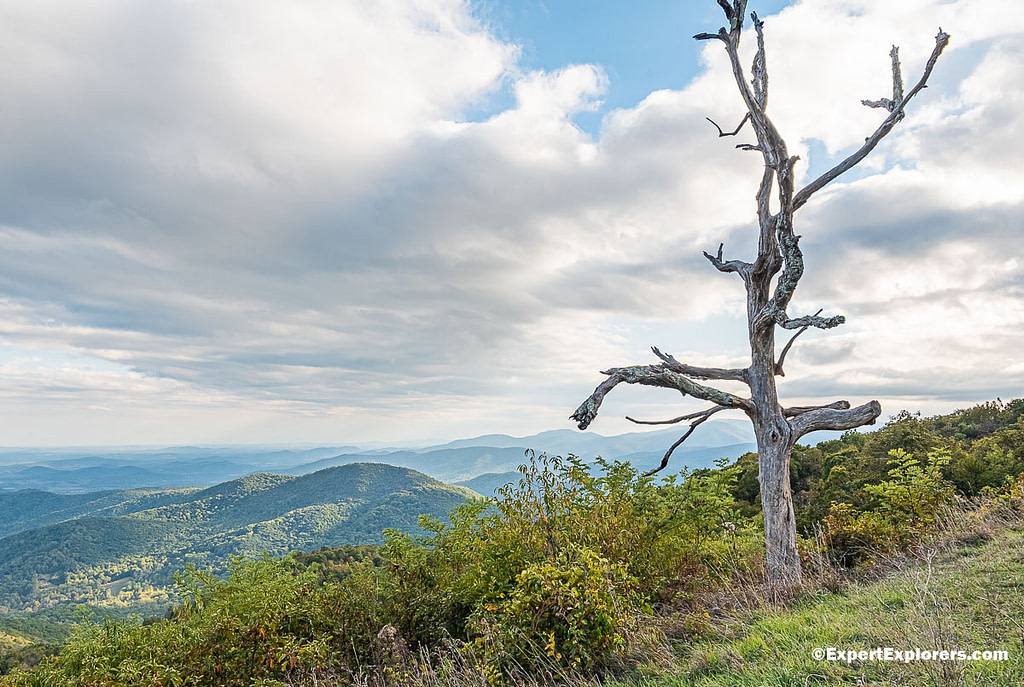 Dead tree in foreground at Little Devil Stairs Overlook off Skyline Drive at Shenandoah National Park, Virginia