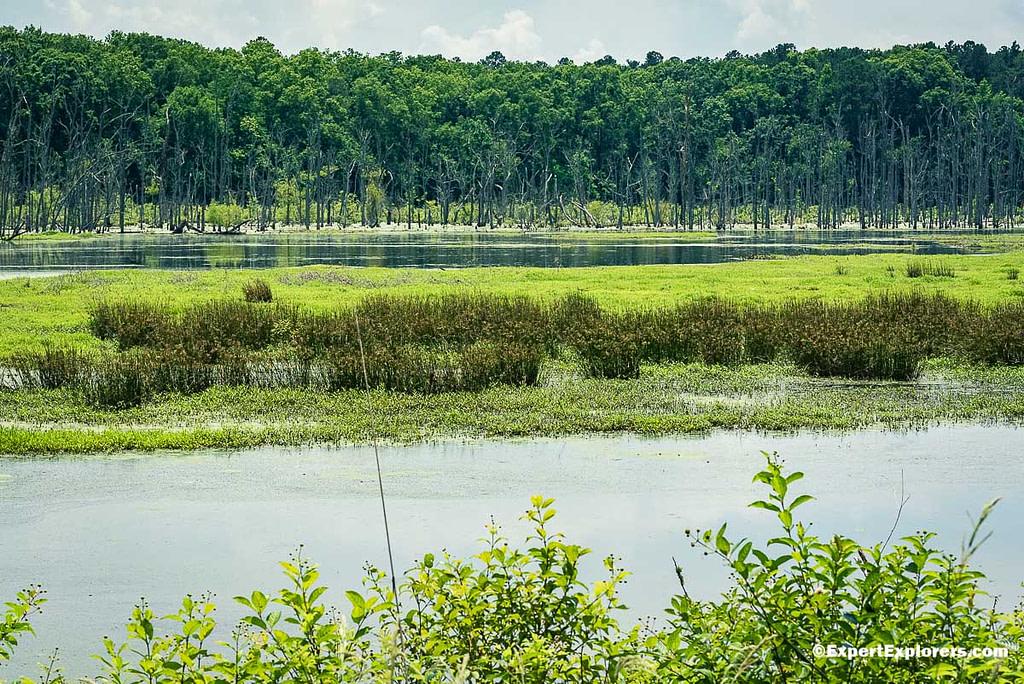 Brown Creek Pee Dee National Wildlife Refuge, North Carolina