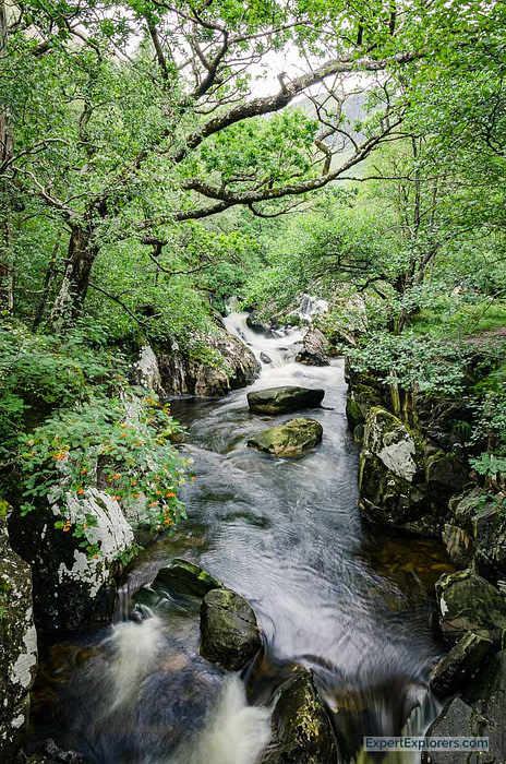 Green lush vegetation on either side of a stream, close by to Glen Nevis, Scotland