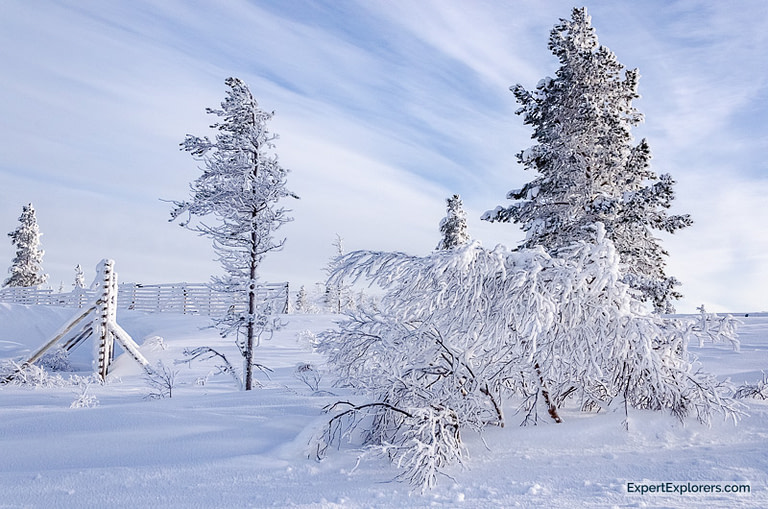 Ice and snow cover the trees in Ivalo, Finland