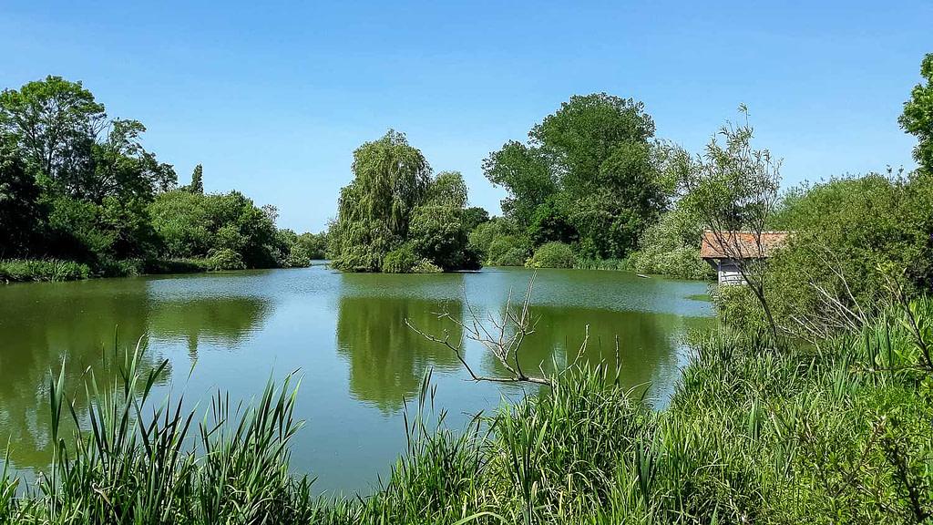 Large bright green lake of Brockhurst Brook in Billingshurst, England