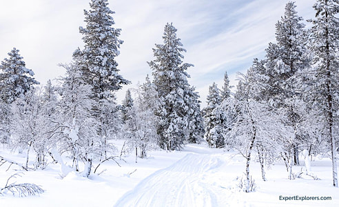Path through the trees and snow in Ivalo, Finland